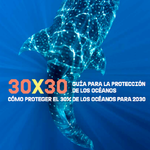 30 x 30: ¿Cómo proteger el 30% de los océanos para 2030?