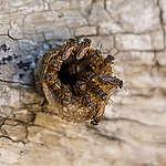 Día mundial de las abejas…Sin ellas no hay vida