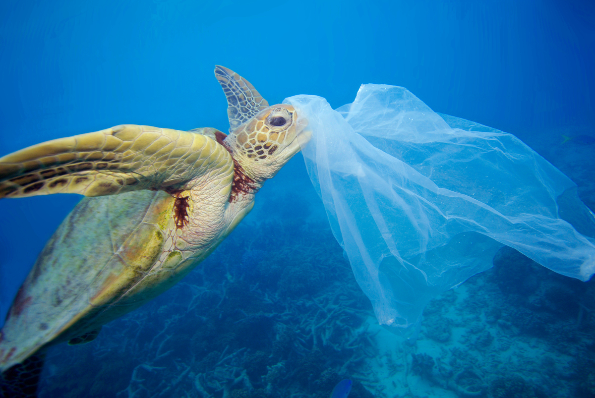 Turtle and Plastic in the Ocean. © Troy Mayne / Oceanic Imagery Publications