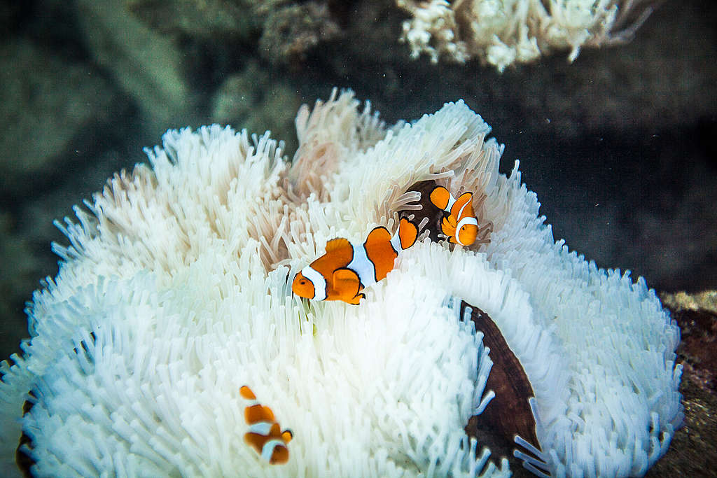 La Gran Barrera de Coral © Abram Powell / Greenpeace