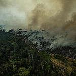 incendios en el amazonas Incendios-en-el-amazonas-causas