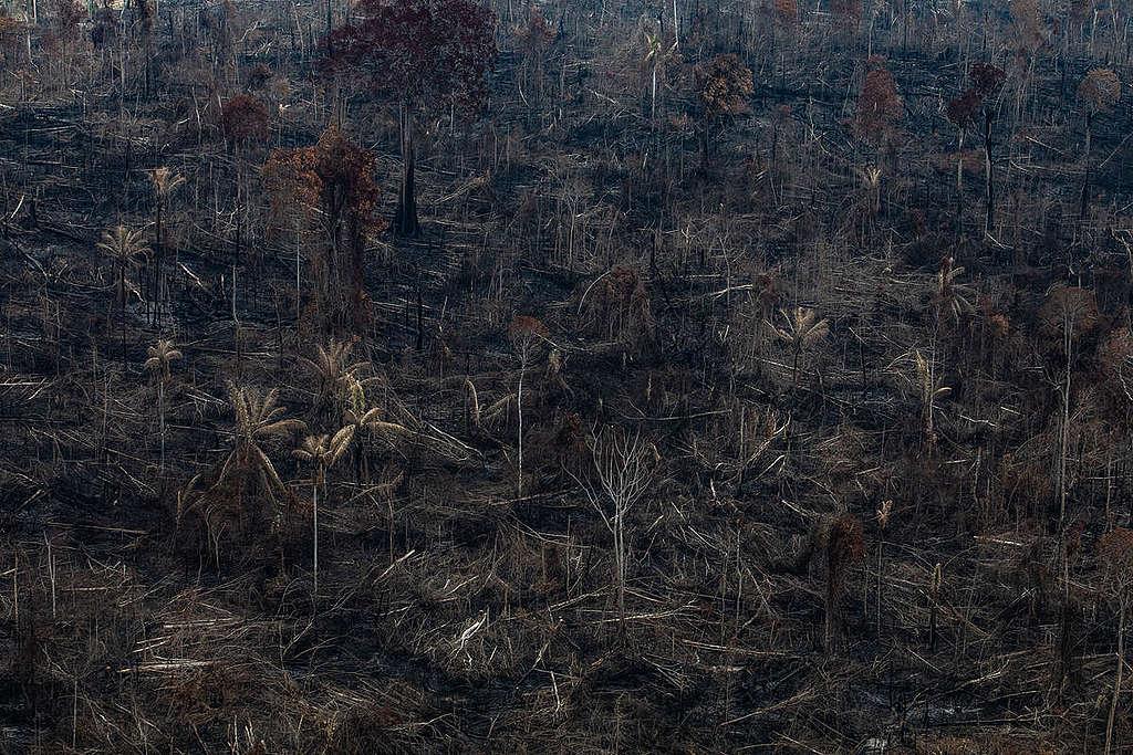 incendios-en-el-amazonas-greenpeace