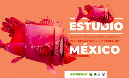 Estudio del impacto de la contaminación por microplásticos de peces en México