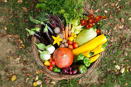 Organic Vegetables in Hungary. © Bence Jardany / Greenpeace