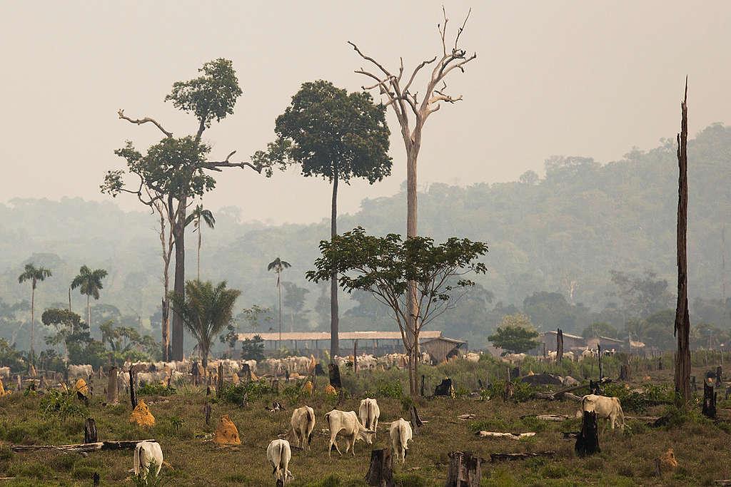 Deforestación por agricultura industrial