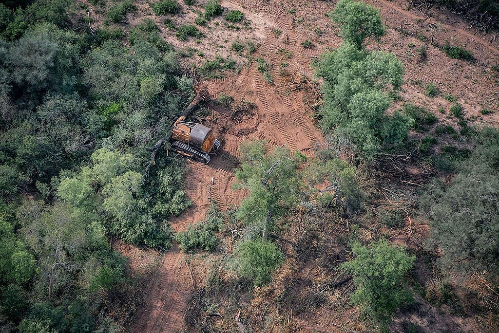 Deforestation for Farming and Agriculture in Chaco Province, Argentina. © Martin Katz / Greenpeace