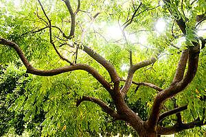 Protección de bosques y selvas en México