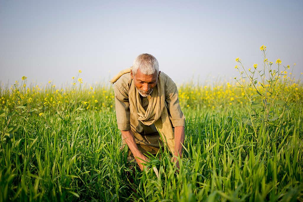 Hombre trabajando el campo