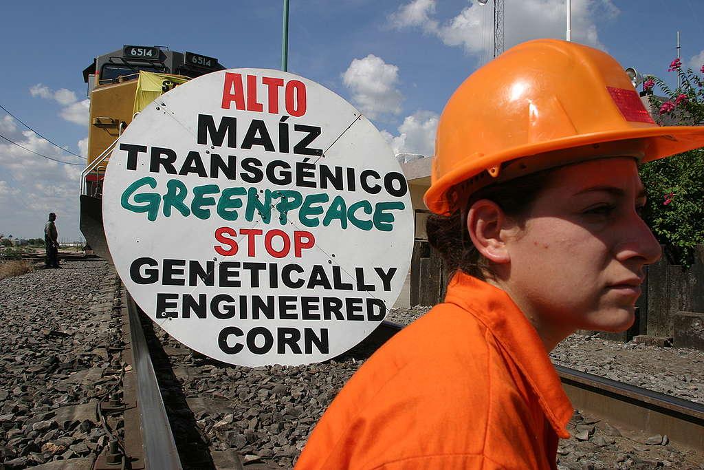 Activistas protestando en contra del maíz transgénico