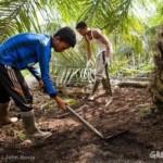 De échte prijs van palmolie