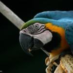 De onbekende schatten van het Amazonewoud