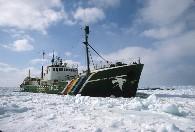 Actie tegen zeehondenjacht in Canada