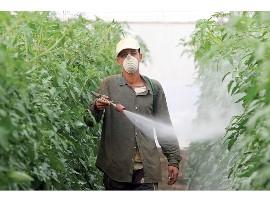 Pesticide-gebruik in Spanje zonder beschermende kleding.