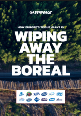 wiping away the boreal report front
