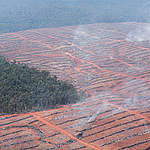 Deforestation in Papua. © Ardiles Rante