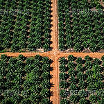 Er is een verbod op ontbossing voor palmolie nodig, niet een tijdelijke opschorting