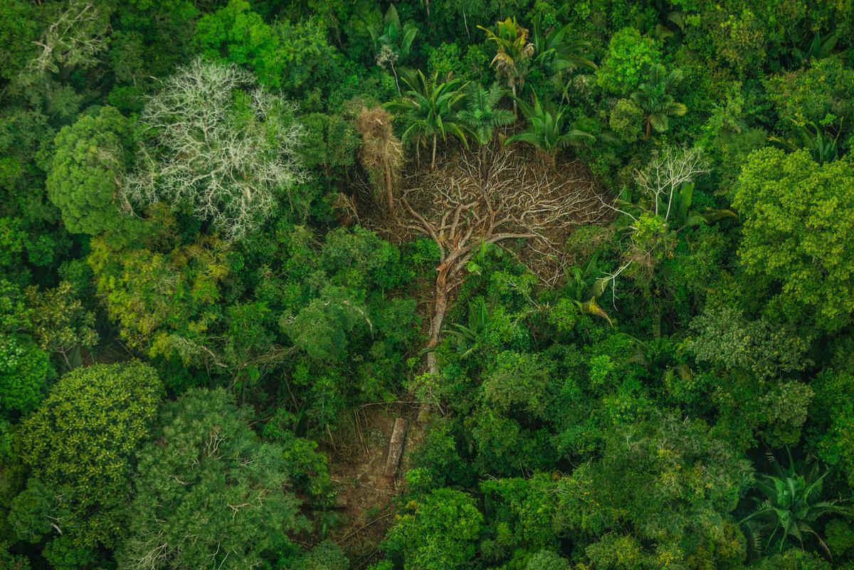 Deforestation in Karipuna Indigenous Land, Brazil. © Christian Braga