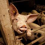 Rabobank, genees van je #vleeskoorts en investeer in de toekomst