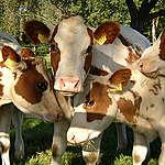 Komt LTO echt op voor de belangen van boeren?