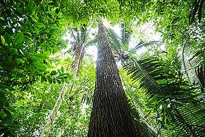 Forest near Tapajós River in the Amazon Rainforest. © Valdemir Cunha