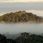 Amazon Rainforest. © Markus Mauthe