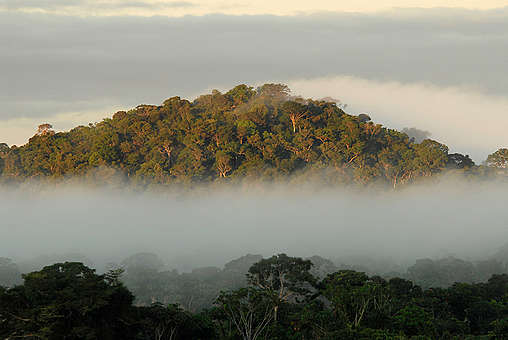 Amazon Rainforest. © Markus Mauthe