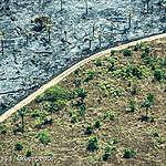 Brief – Ontbossingsvrije ketens: tijd voor wetgeving