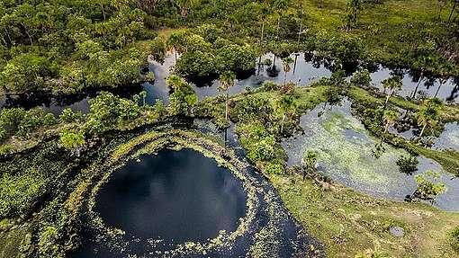 Cerrado Biome in BrazilBioma do Cerrado