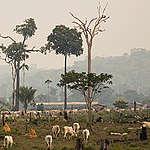 Bedrijven verwaarlozen belofte over ontbossing: 50 miljoen hectare verwoest