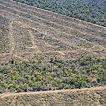 Vlees in de supermarkt gelinkt aan ontbossing in Argentinië