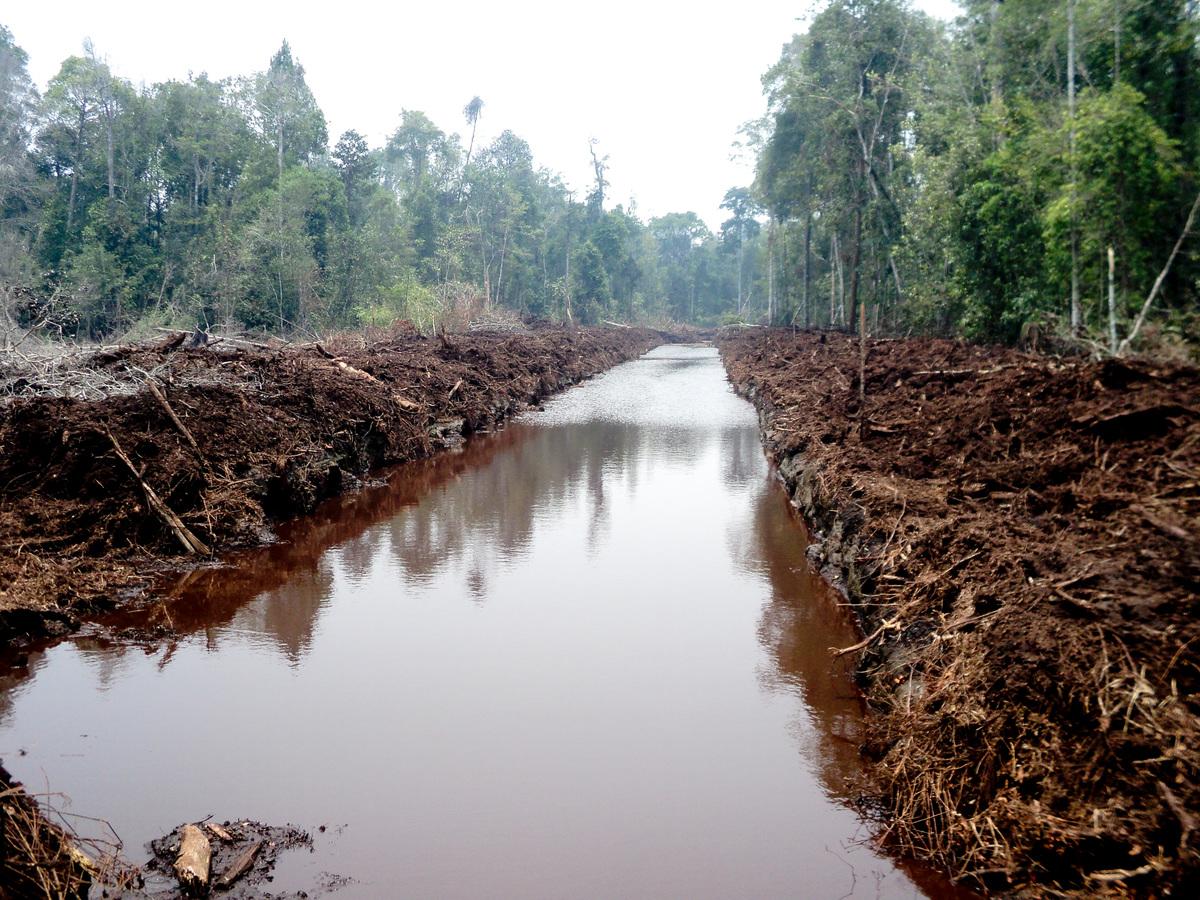 Maart 2014 - De veengronden worden afgewaterd door een pas aangelegd kanaal © Greenpeace