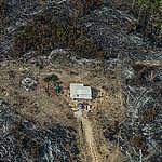 Nederland handelsland: onze rol in ontbossing
