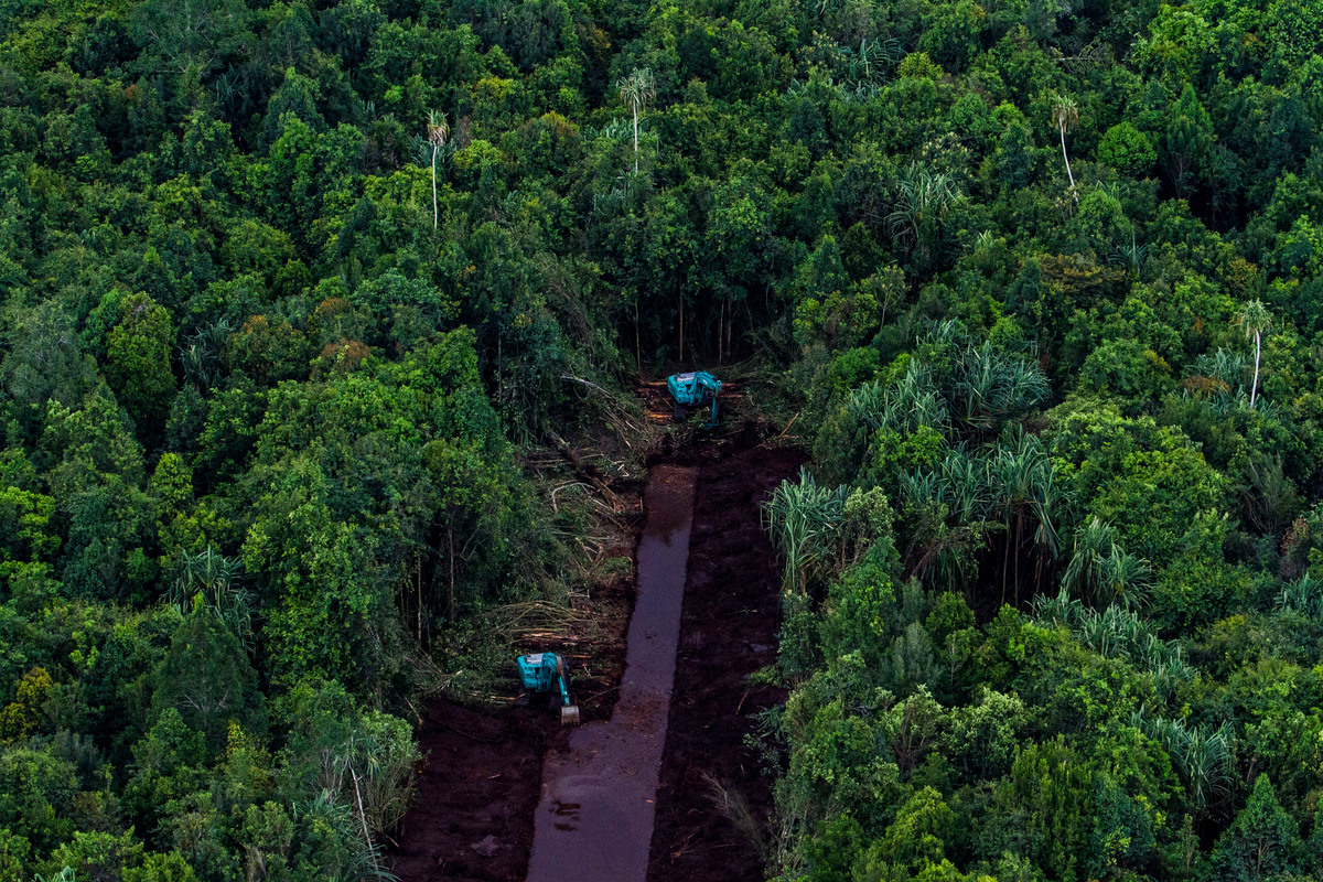 PT RAPP Pulpwood Concession in Riau. © Ulet  Ifansasti / Greenpeace