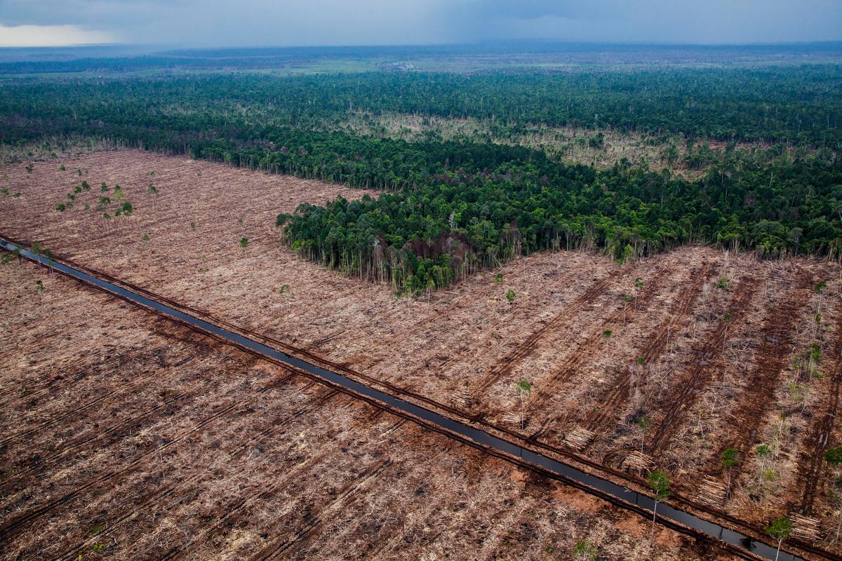 Mei 2014 – Honderden hectares regenwoud zijn vernietigd. © Ulet Ifansasti / Greenpeace