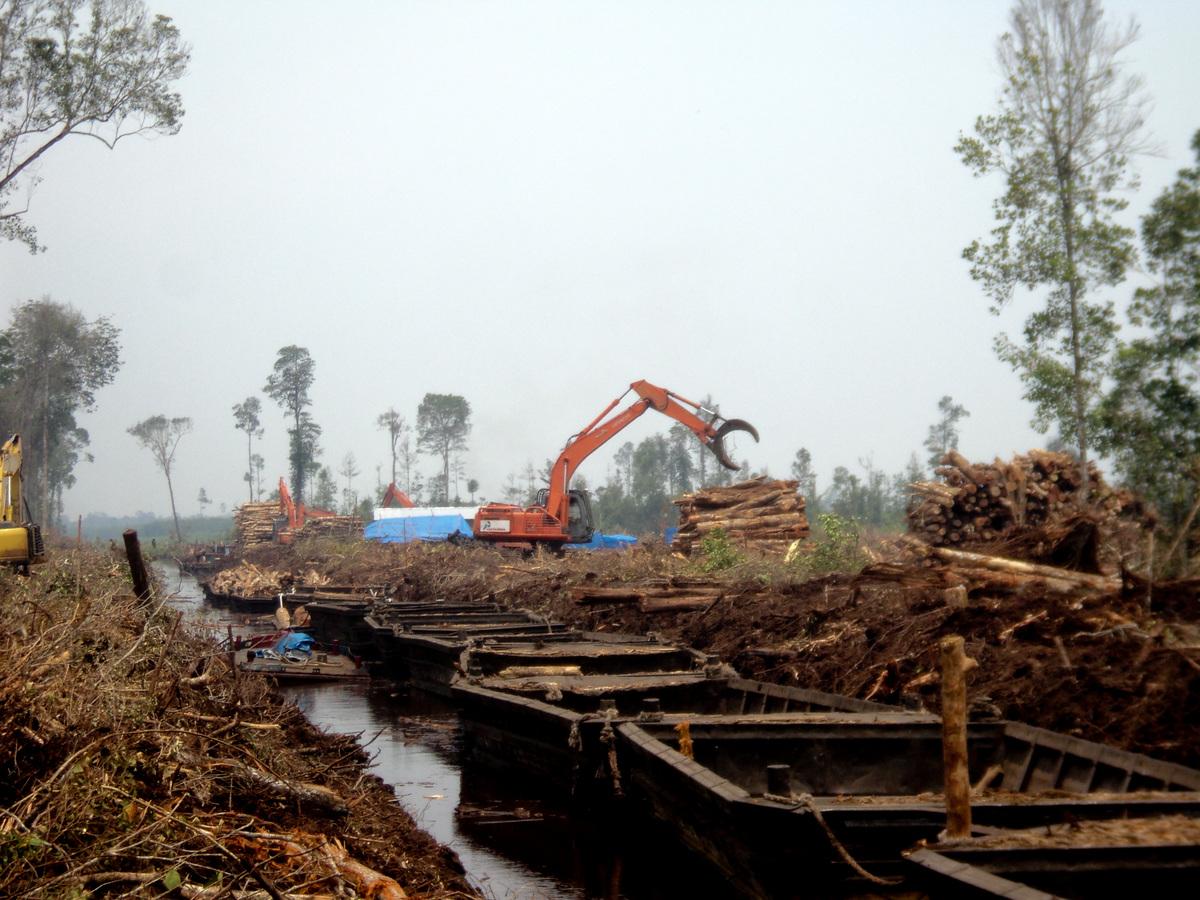 Maart 2014 - Bulldozers kappen bos op Padang Island © Greenpeace