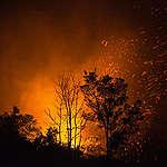Wereldwijde bosbranden: wat staat ons dit jaar te wachten?