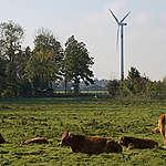 Kabinetsplannen aanpak stikstofcrisis: (nog) een gemiste kans in omslag duurzame landbouw