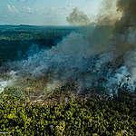 Minister Schouten ontvangt massale oproep voor Europese wet om bossen wereldwijd te beschermen