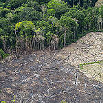 Toename ontbossing Amazonewoud