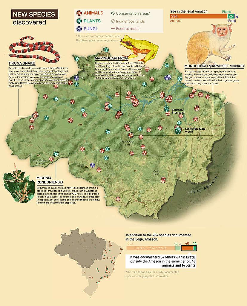 diersoorten amazonewoud