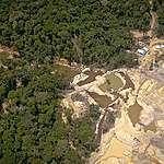Ontbossing en Coronavirus nemen toe in Amazone