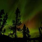 Vier goede redenen om de noordelijke bossen te beschermen