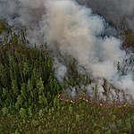 Siberië: Wetenschappers bezorgd over bosbranden en hittegolf