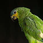 Wat is biodiversiteit en waarom is de Amazone zo belangrijk?