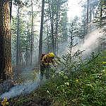 Wie zijn de Greenpeace vrijwilligers die Russische bosbranden blussen?