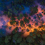 bosbranden in rusland