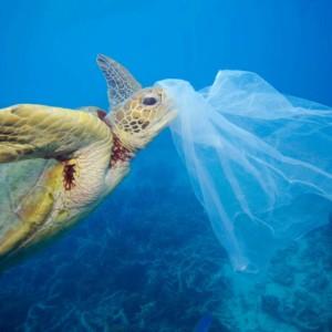 Govt takes vital step towards plastic pollution solution