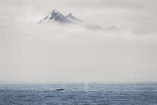 Fog and Mountains and Humpback Whales in the Antarctic. © Christian Åslund / Greenpeace