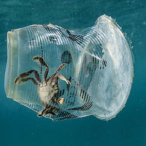 End-of-life plastic solutions not as important as source reductions
