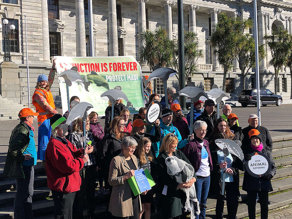 Maui petition handover at Parliament in Wellington